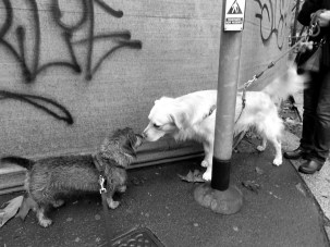 elisa villa cani a milano 05