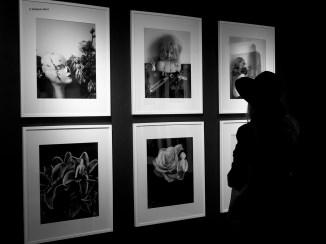012 Galleria Sozzani Mostra Araki Amore Raffaello Merli