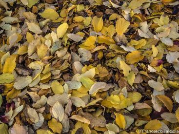 autunno al parco sempione