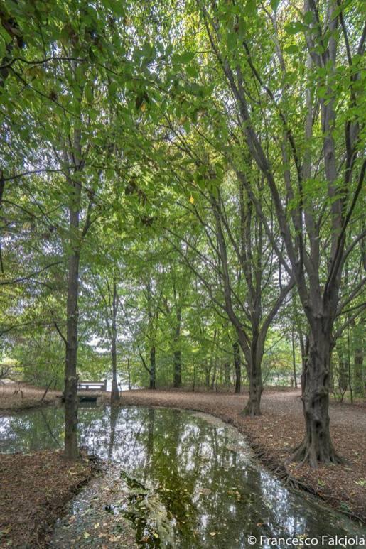 bosco in citt