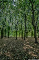 bosco parco lambro