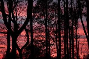 tramonto al forlanini daniela loconte foto 5