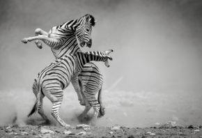 Sonalini Khetrapal, The Duel, 2018 © Sonalini Khetrapal