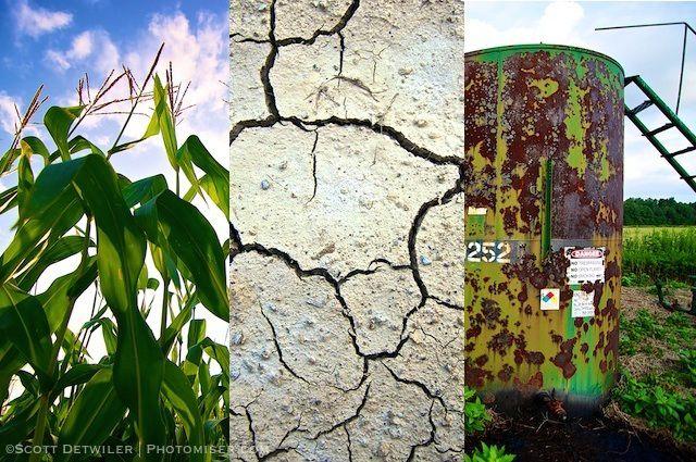 Ohio Cornfield Triptych
