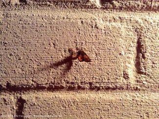 Moth on a brick wall lit by porchlight
