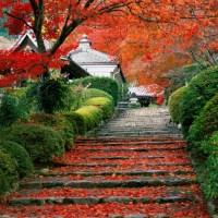Kyoto Mood