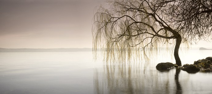 Weeping Willow Woman