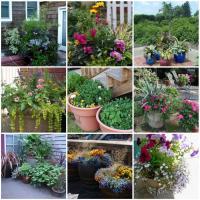 Small container garden photos