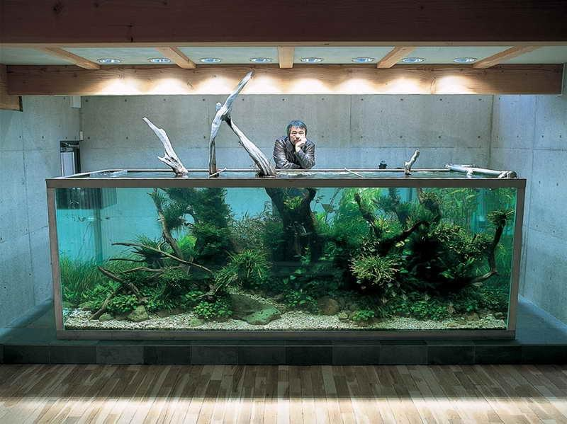 decorate small living room colors with gray couch aquarium design ideas photos