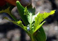 Florida garden pests photos