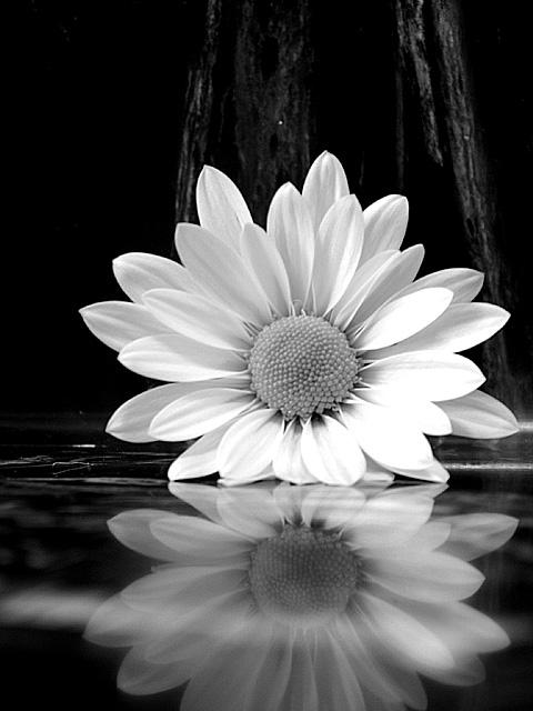 Modern Simplicity Ansel Adams Photography Flowers