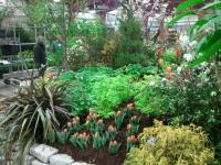 Tropical vegetable garden photos