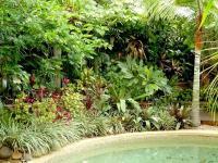 Tropical garden photos australia