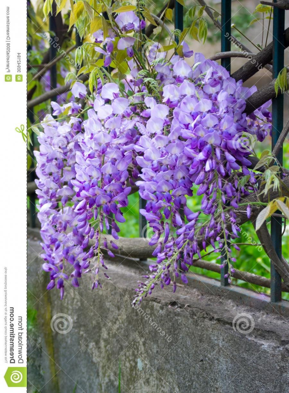 Wild Purple Flowers Photos
