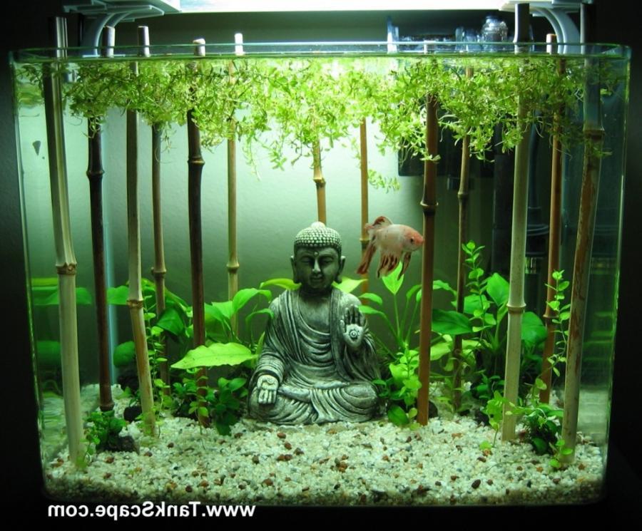 home depot kitchen cabinet drapes bamboo aquarium plants photos