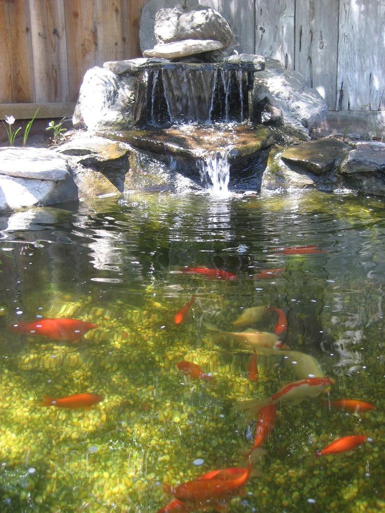 Garden ponds waterfalls photos
