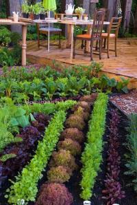 Edible garden plants photos
