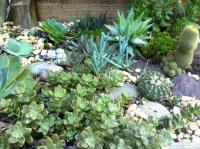 Succulent rock garden photos