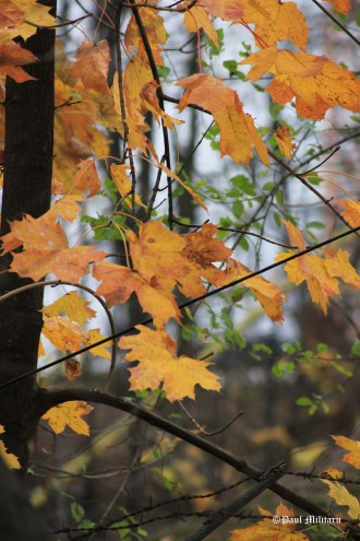 trees-and-leaves-in-fall-1