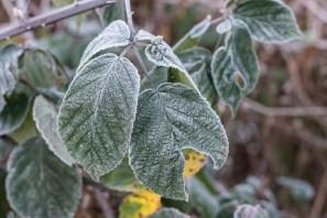 bushy-park_16-11-29_11_1500