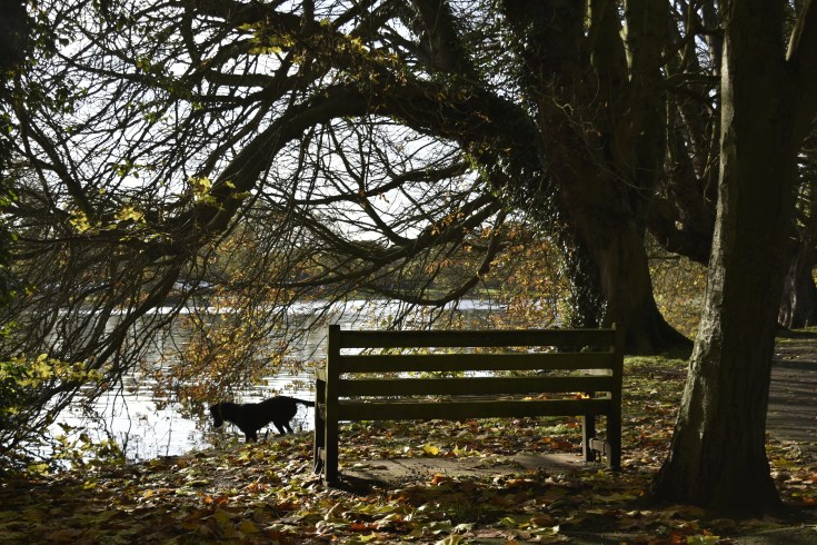 orleans_bench_4_5