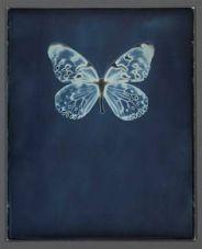 adam_fuss_butterfly_01