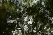bushy_17-06-06_5_sec_497_low
