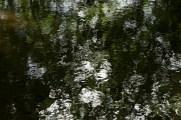bushy_17-06-06_5_sec_498_low