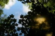 bushy_park_seq_1_5_sec17-06-10_105_low