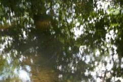 bushy_water_17-06-03_05_sec_seq_1_041_low