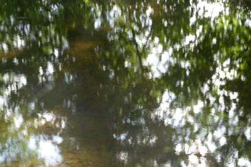 bushy_water_17-06-03_05_sec_seq_1_050_low
