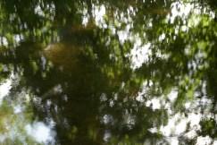 bushy_water_17-06-03_05_sec_seq_1_087_low