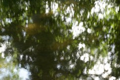 bushy_water_17-06-03_05_sec_seq_1_088_low