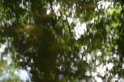 bushy_water_17-06-03_05_sec_seq_1_091_low