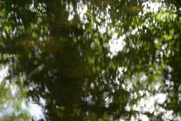 bushy_water_17-06-03_05_sec_seq_1_093_low