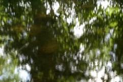 bushy_water_17-06-03_05_sec_seq_1_096_low