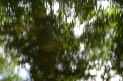 bushy_water_17-06-03_05_sec_seq_1_097_low