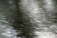 bushy_water_17-06-03_05_sec_seq_1_107_low