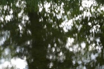 bushy_water_17-06-03_05_sec_seq_1_137_low