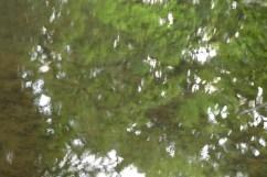 bushy_water_17-06-03_05_sec_seq_2_407_low