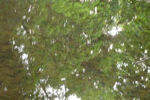 bushy_water_17-06-03_05_sec_seq_2_411_low