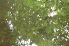bushy_water_17-06-03_05_sec_seq_2_416_low