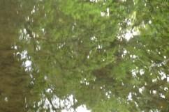 bushy_water_17-06-03_05_sec_seq_2_418_low