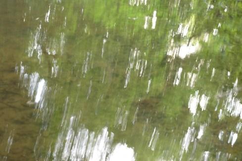 bushy_water_17-06-03_05_sec_seq_2_422_low