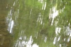 bushy_water_17-06-03_05_sec_seq_2_423_low