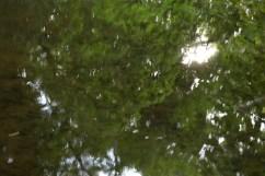bushy_water_17-06-03_05_sec_seq_2_473_low