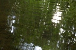 bushy_water_17-06-03_05_sec_seq_2_478_low