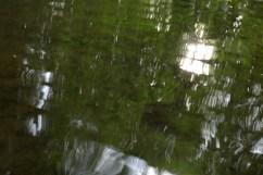 bushy_water_17-06-03_05_sec_seq_2_479_low