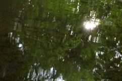 bushy_water_17-06-03_05_sec_seq_2_481_low
