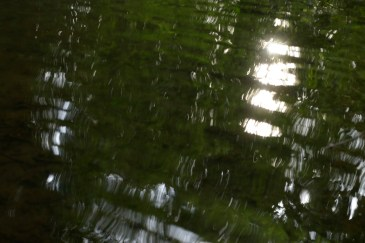 bushy_water_17-06-03_05_sec_seq_2_487_low